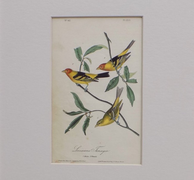 John James Audubon, 'Louisiana Tanager,' original hand-colored lithograph from 'Bird's of America, first octavo edition, 1840, matted but not framed. Estimate: $800-$1,000