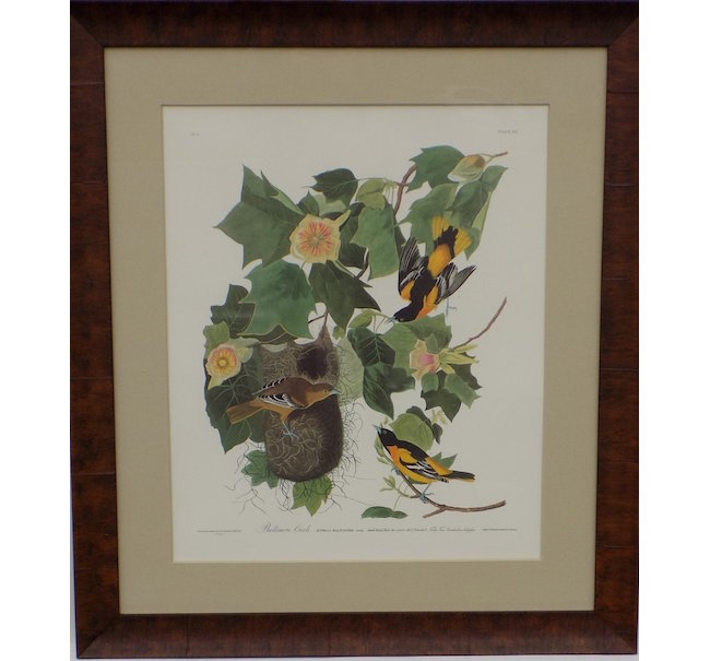 John James Audubon, 'Baltimore Oriole', original limited edition Princeton Audubon print of orioles (505/1500). Estimate: $1,300-$1,700